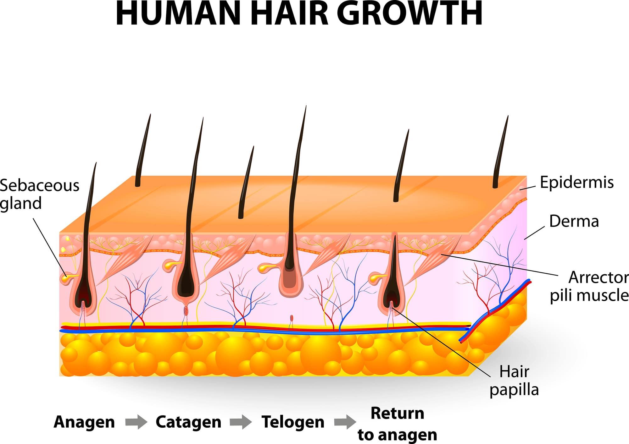 Så fungerar hårborttagning med laser- För dig som vill fördjupa dig
